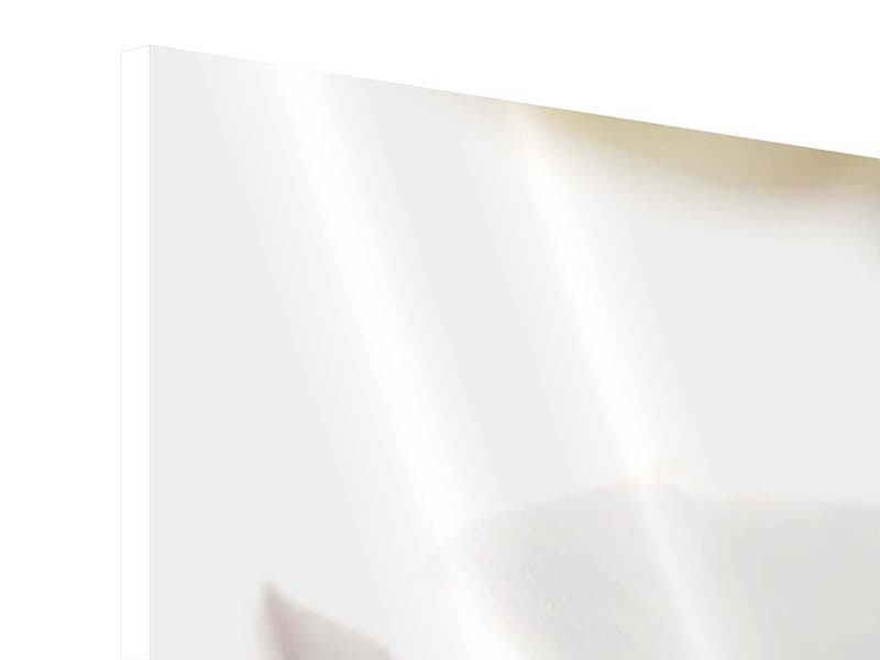 Panorama Hartschaumbild 3-teilig XXL Orchideenblüte