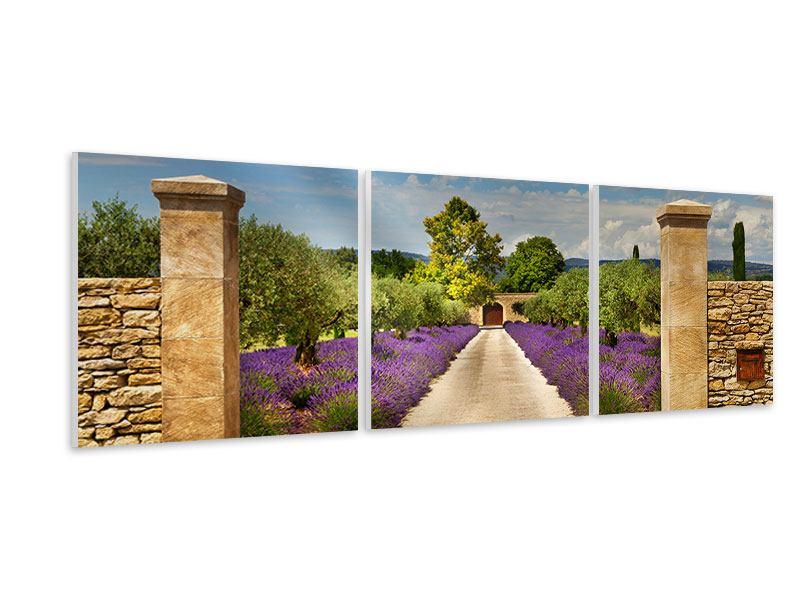 Panorama Hartschaumbild 3-teilig Lavendel-Garten