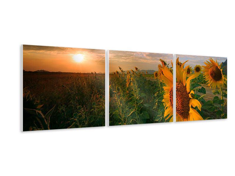 Panorama Hartschaumbild 3-teilig Sonnenblumen im Lichtspiel
