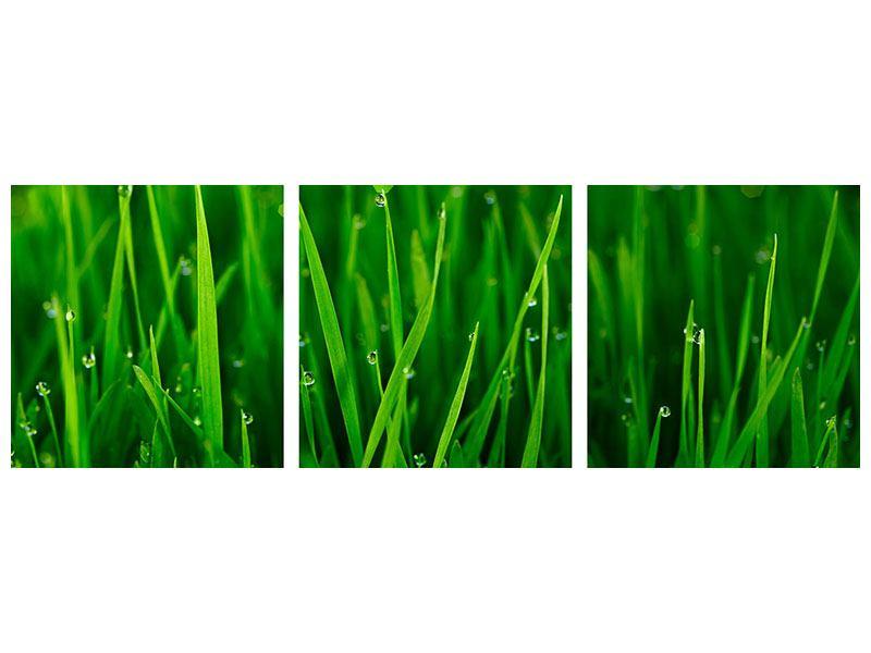 Panorama Hartschaumbild 3-teilig Gras mit Morgentau