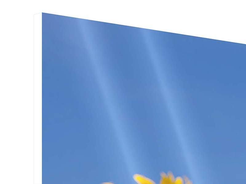 Panorama Hartschaumbild 3-teilig Himmlische Sonnenblumen