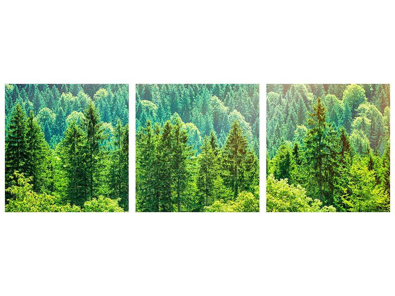 Panorama Hartschaumbild 3-teilig Der Waldhügel