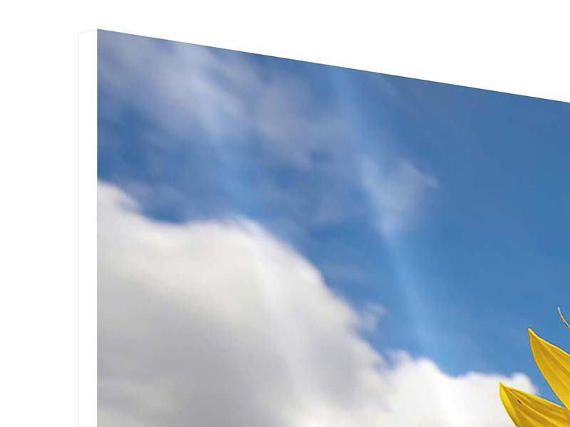 Panorama Hartschaumbild 3-teilig Das Feld der Sonnenblumen