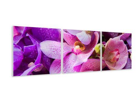 Panorama Hartschaumbild 3-teilig Im Orchideenparadies