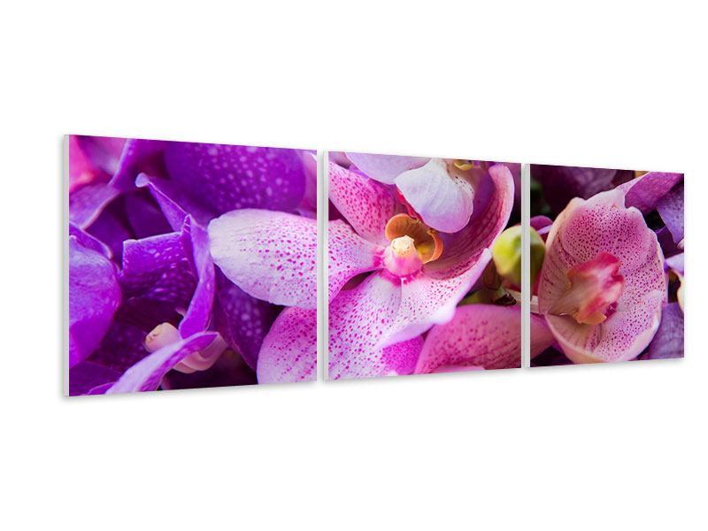 Panoramic 3 Piece Forex Print Orchid Paradise