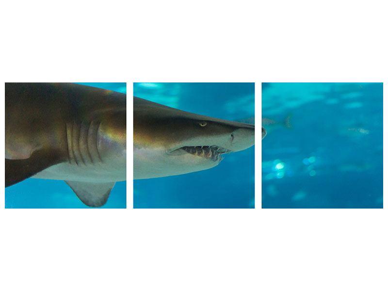 Panorama Hartschaumbild 3-teilig Der Haifisch