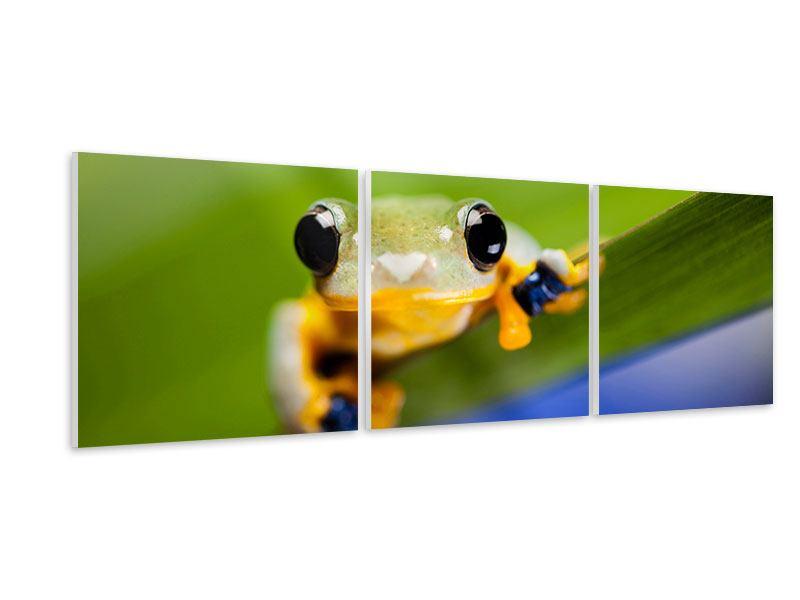 Panorama Hartschaumbild 3-teilig Frosch XXL