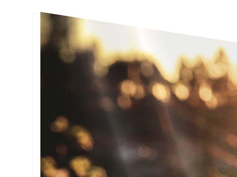 Panorama Hartschaumbild 3-teilig Gänseblümchen bei Sonnenuntergang