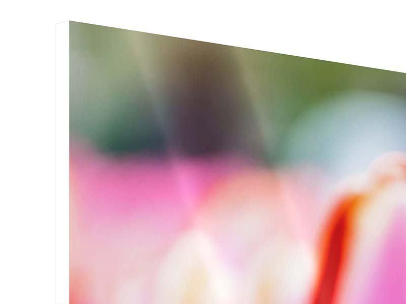 Panorama Hartschaumbild 3-teilig Pretty in Pink