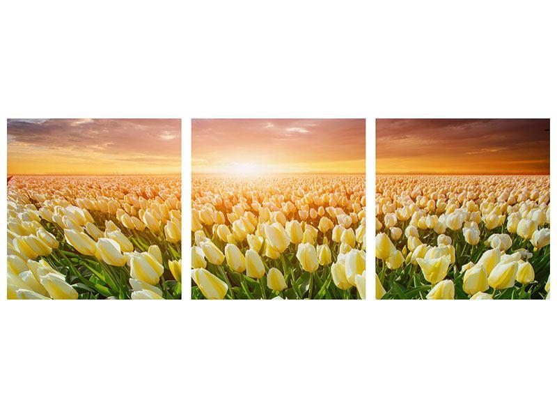 Panorama Hartschaumbild 3-teilig Sonnenaufgang bei den Tulpen