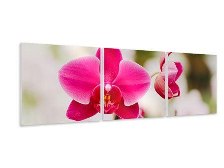 Panorama Hartschaumbild 3-teilig Perspektivische Orchideen