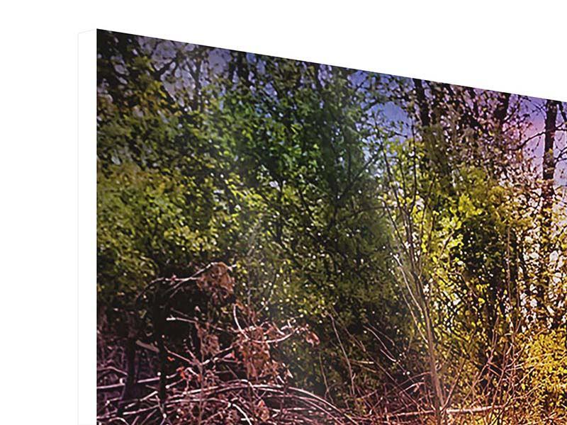 Panorama Hartschaumbild 3-teilig Der Waldpfad