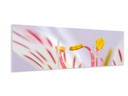 Panorama Hartschaumbild 3-teilig Close Up Die exotische Schönheit