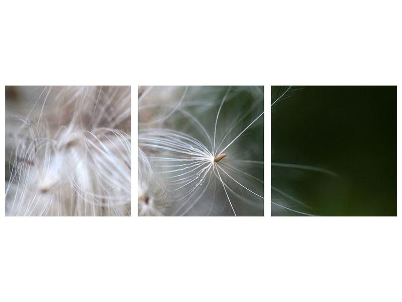 Panorama Hartschaumbild 3-teilig Close up Blütenfasern
