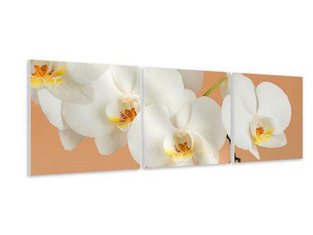 Panorama Hartschaumbild 3-teilig Weisse Orchideenblüten