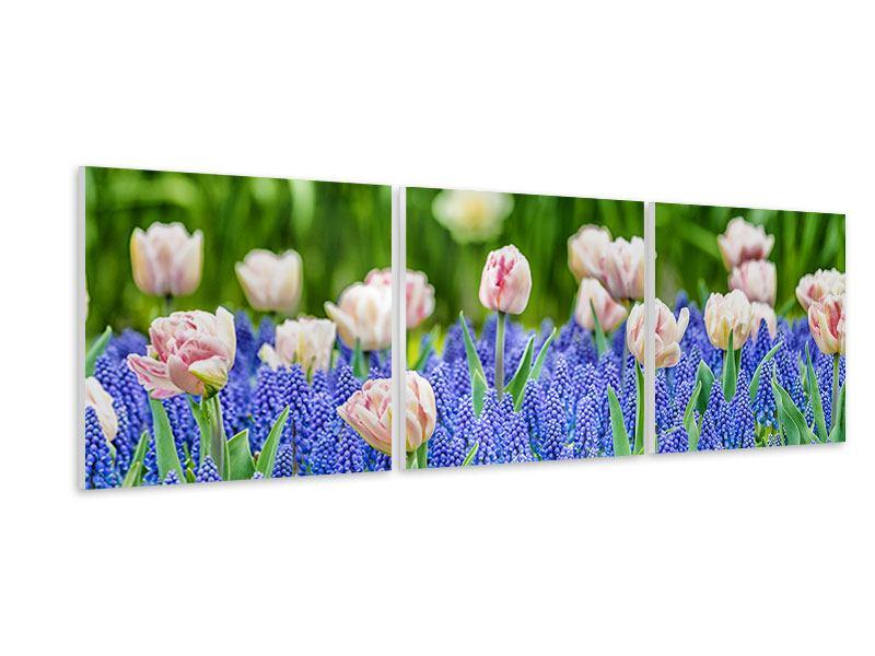 Panorama Hartschaumbild 3-teilig Ein Garten mit Tulpen