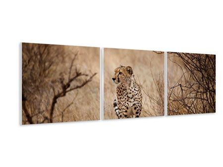 Panorama Hartschaumbild 3-teilig Eleganter Gepard