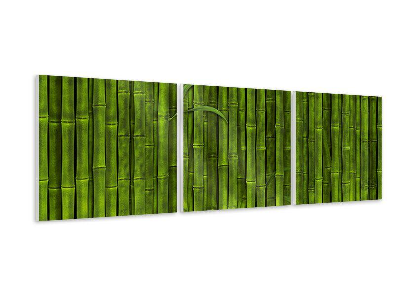 Panorama Hartschaumbild 3-teilig Wasserspiegelung Bambus