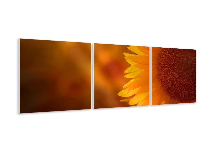 Panorama Hartschaumbild 3-teilig Macro-Sonnenblume