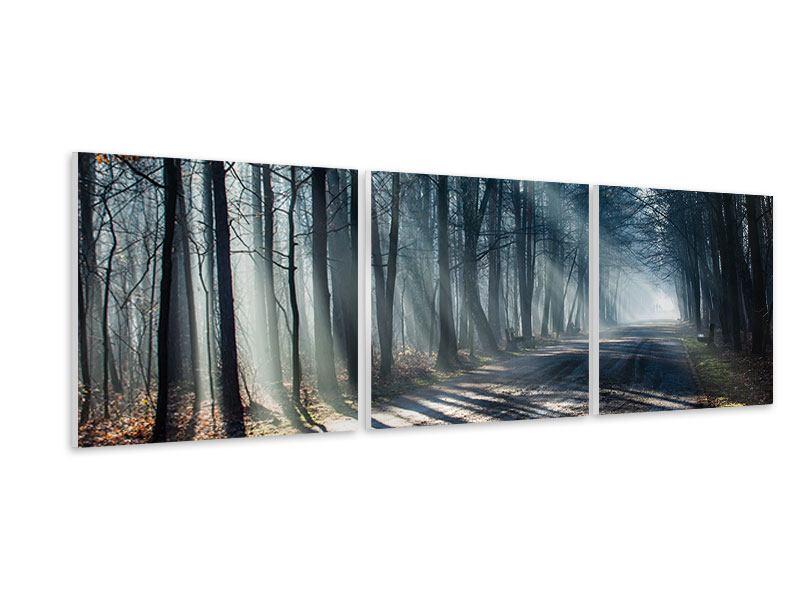 Panorama Hartschaumbild 3-teilig Wald im Lichtstrahl