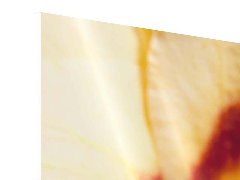 Panorama Hartschaumbild 3-teilig Riesenlilie