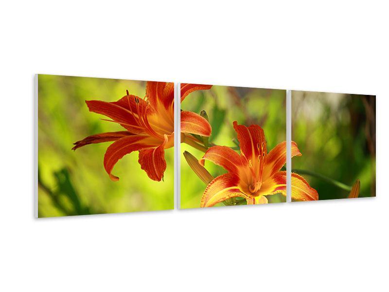 Panorama Hartschaumbild 3-teilig Lilien in der Natur