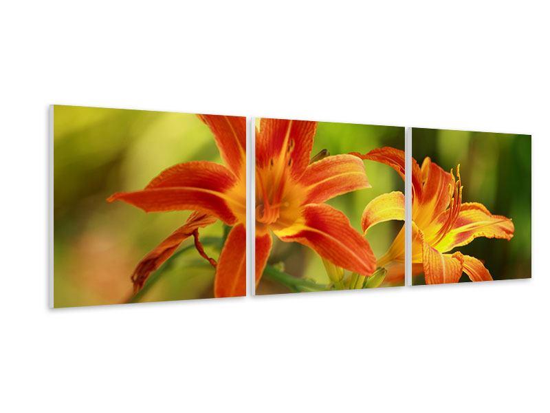 Panorama Hartschaumbild 3-teilig Natural Lilien