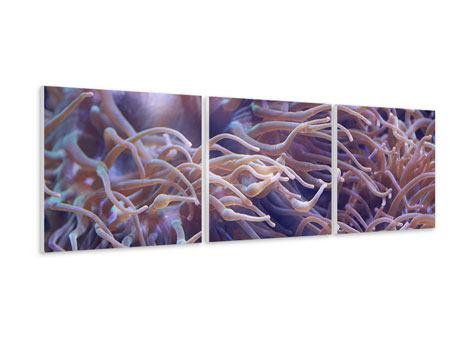 Panorama Hartschaumbild 3-teilig Korallenriff