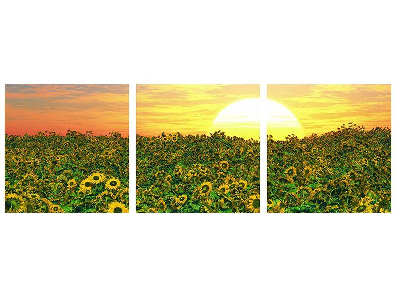 Panorama Hartschaumbild 3-teilig Blumenpanorama bei Sonnenuntergang