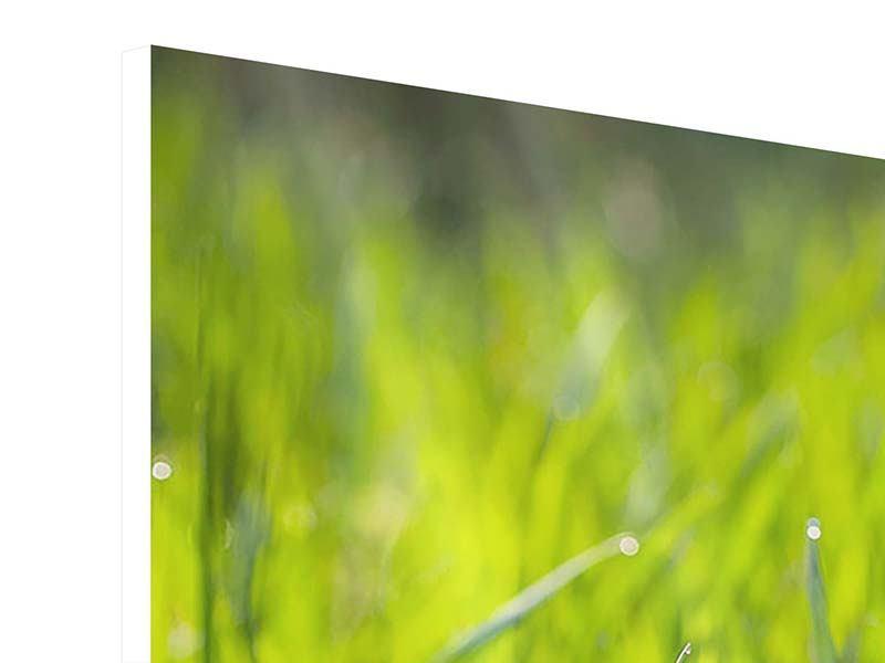 Panorama Hartschaumbild 3-teilig Gras im Morgentau