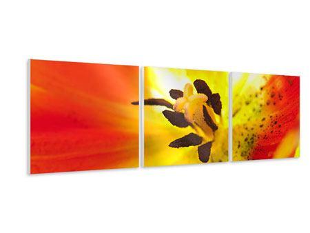 Panorama Hartschaumbild 3-teilig Die Narbe einer Tulpe XXL