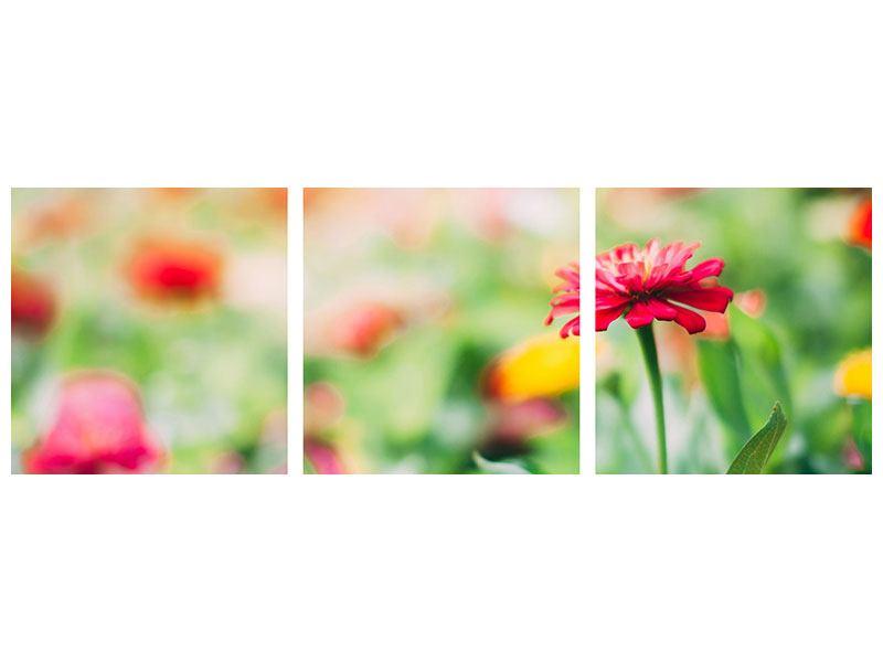 Panorama Hartschaumbild 3-teilig Im Blumengarten