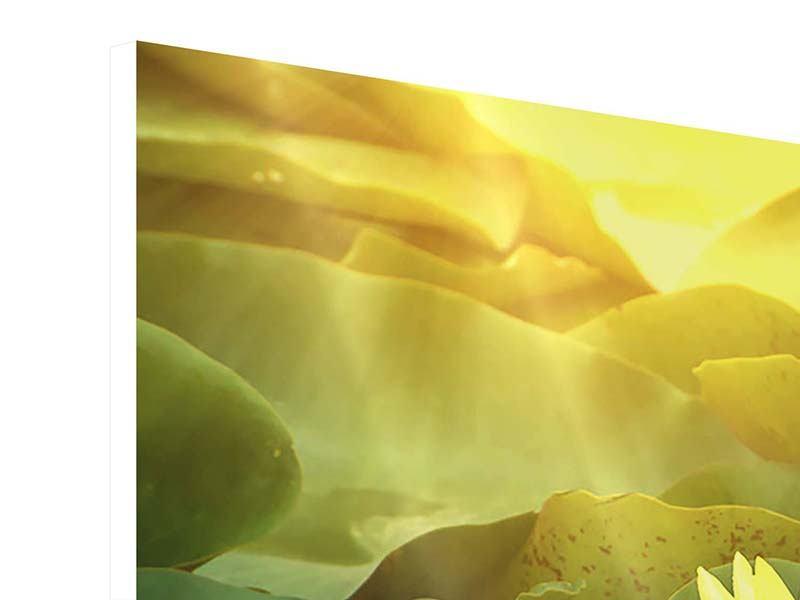 Panorama Hartschaumbild 3-teilig Wilde Lotus