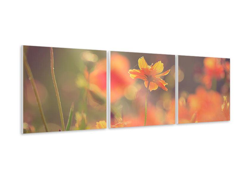 Panorama Hartschaumbild 3-teilig Blütenpracht