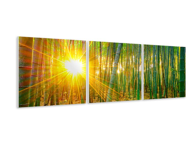 Panorama Hartschaumbild 3-teilig Bambusse