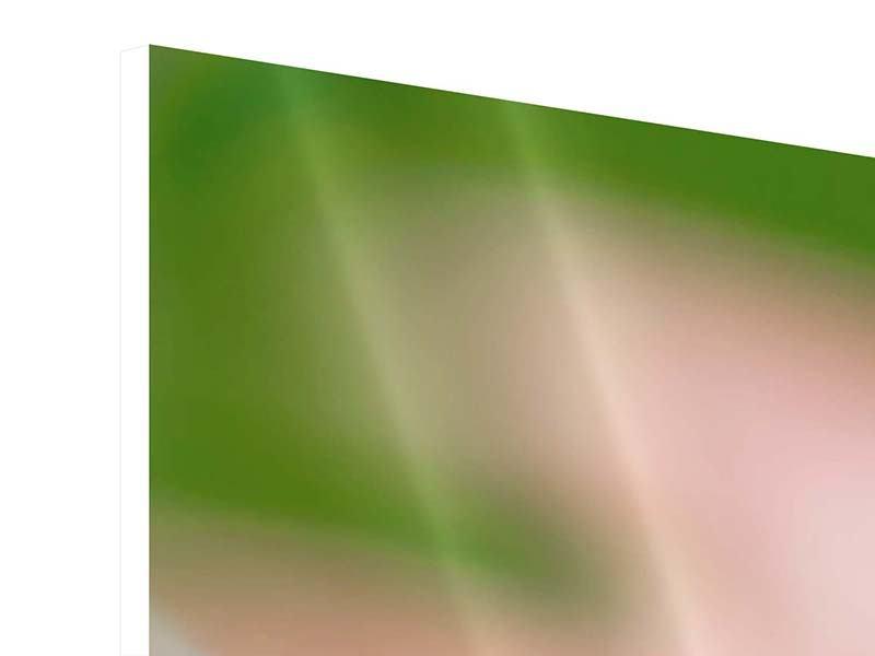 Panorama Hartschaumbild 3-teilig Close Up einer Blüte