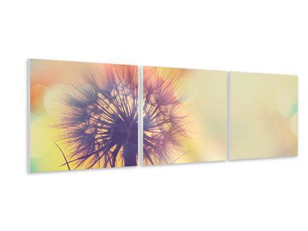 Panorama Hartschaumbild 3-teilig Die Pusteblume im Licht