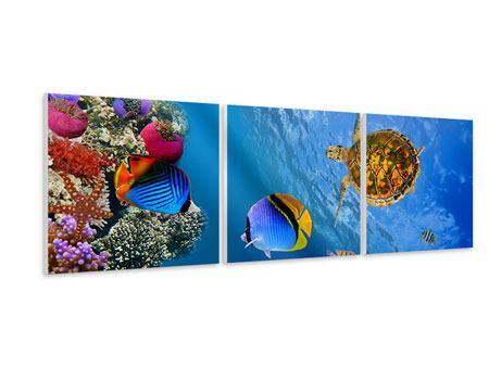 Panorama Hartschaumbild 3-teilig Fisch im Wasser