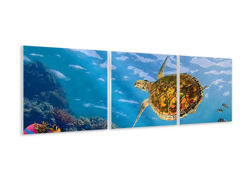 Panorama Hartschaumbild 3-teilig Die Wasserschildkröte