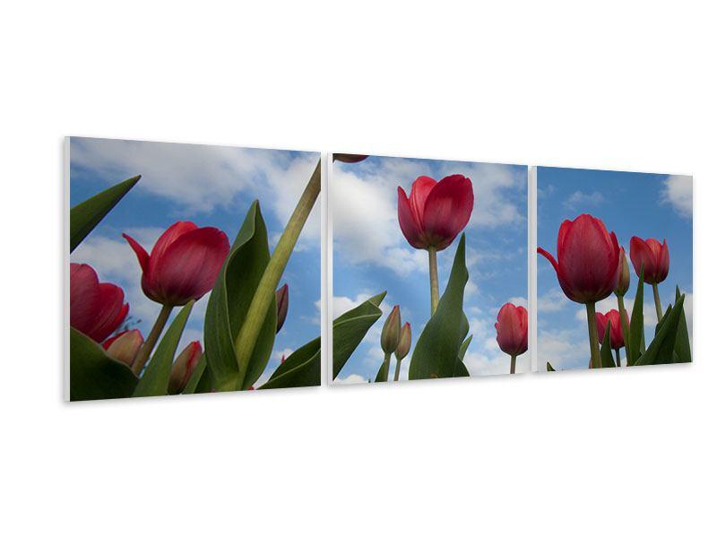 Panorama Hartschaumbild 3-teilig Tulpen im Himmel