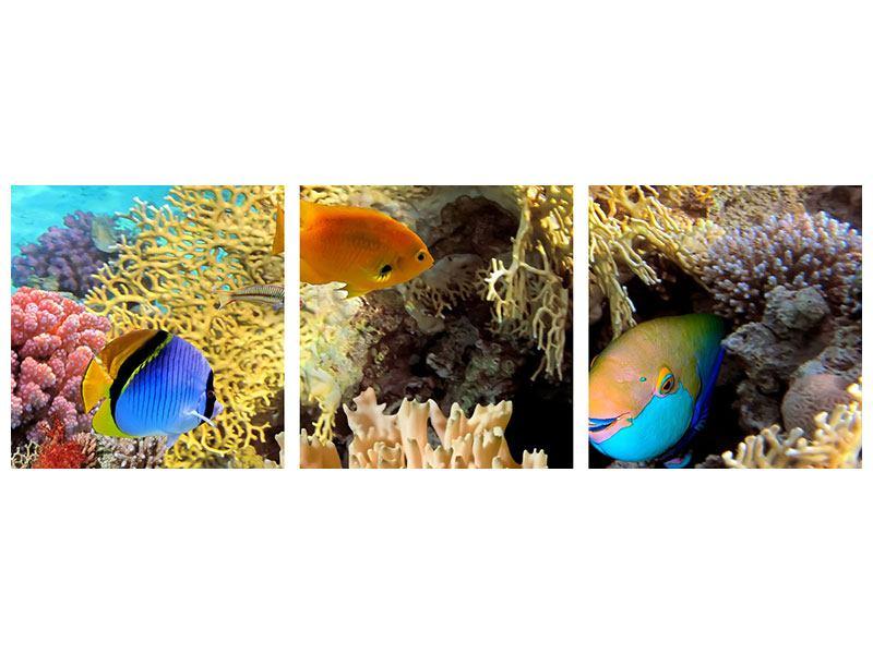 Panorama Hartschaumbild 3-teilig Fischreichtum