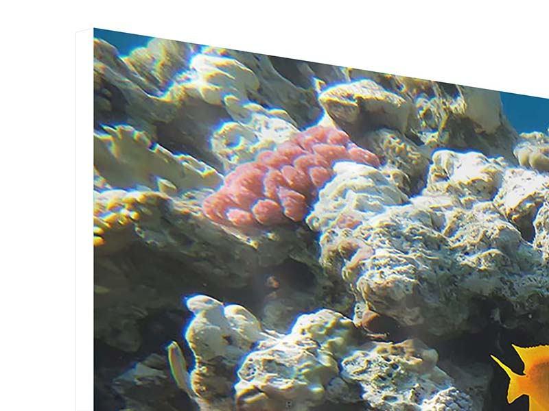 Panorama Hartschaumbild 3-teilig Das Aquarium