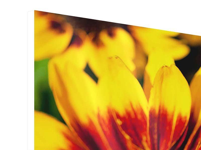 Panorama Hartschaumbild 3-teilig Reife Sonnenblumen