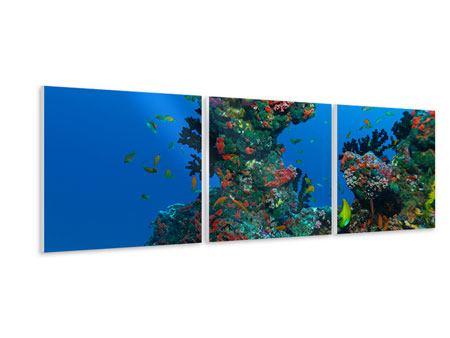 Panorama Hartschaumbild 3-teilig Die Welt der Fische