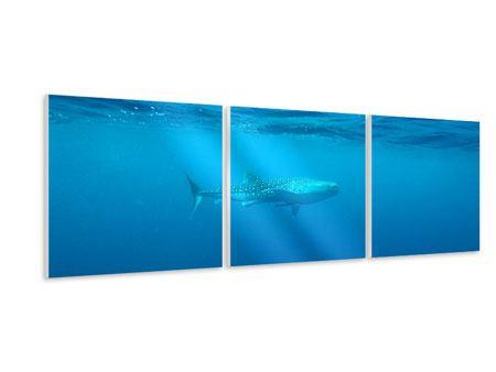 Panorama Hartschaumbild 3-teilig Der Walhai