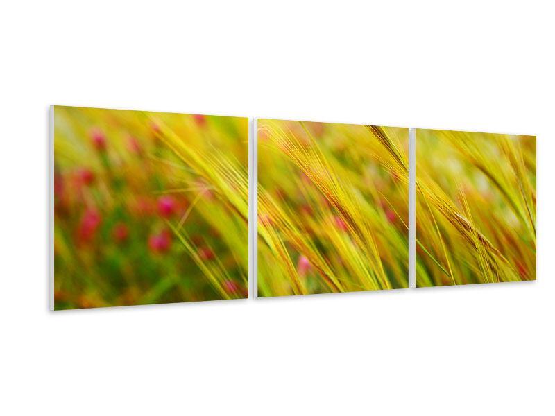 Panorama Hartschaumbild 3-teilig Das Weizenfeld