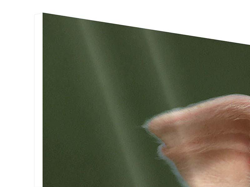 Panorama Hartschaumbild 3-teilig Schweinchen Namens Babe