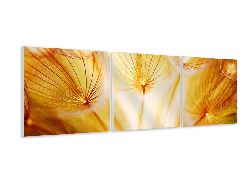 Panorama Hartschaumbild 3-teilig Close Up Pusteblume im Licht
