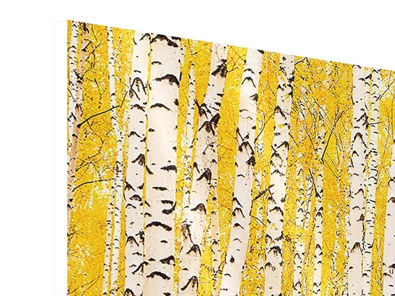 Panorama Hartschaumbild 3-teilig Der Birkenwald im Herbst