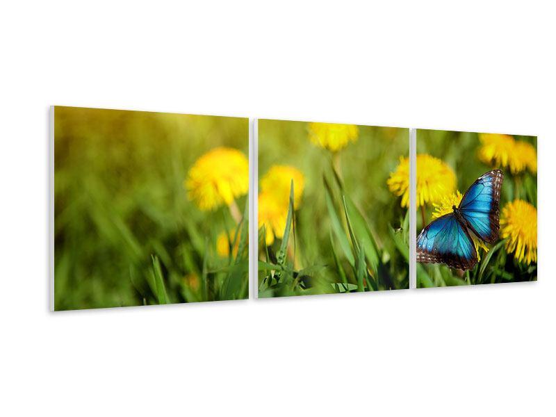 Panorama Hartschaumbild 3-teilig Der Löwenzahn und der Schmetterling